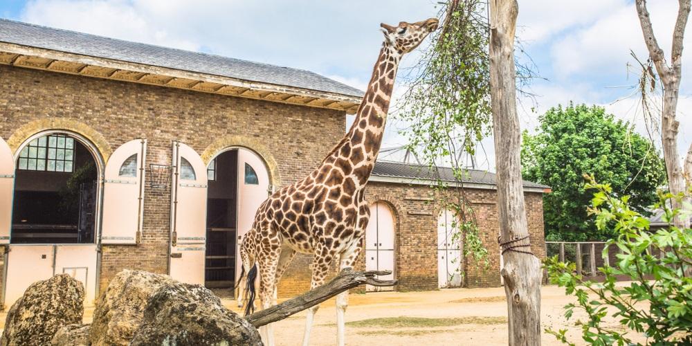 Cheap Zoo Tickets: London Zoo & many others - Money Saving