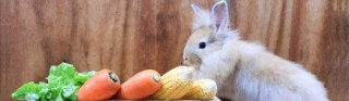 Cheap Easter veg offers - incl 1kg of carrots from 9p