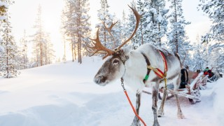 15 tips to do Lapland on a budget